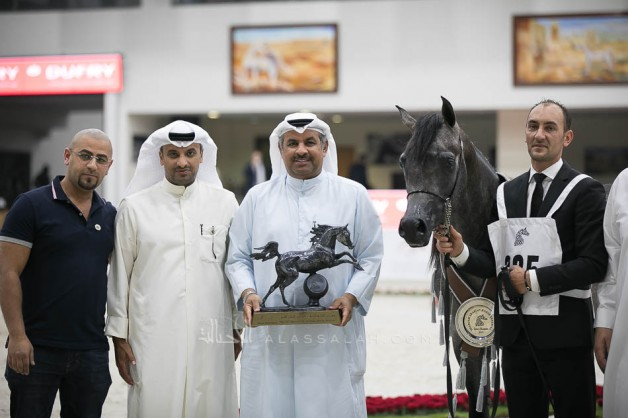 EKS Farajj for AL Khashab Stud claims the silver in the Sharjah International Arabian Horse Festival