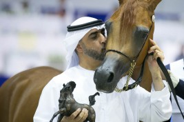 """""""A Vision MI"""" flying high with the Fillies golden medal in DIAHC 2019 forAlBidayer Stud"""