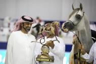 Ajman Stud compiles 5 medals in Dubai International Arabian Horse Championship 2019