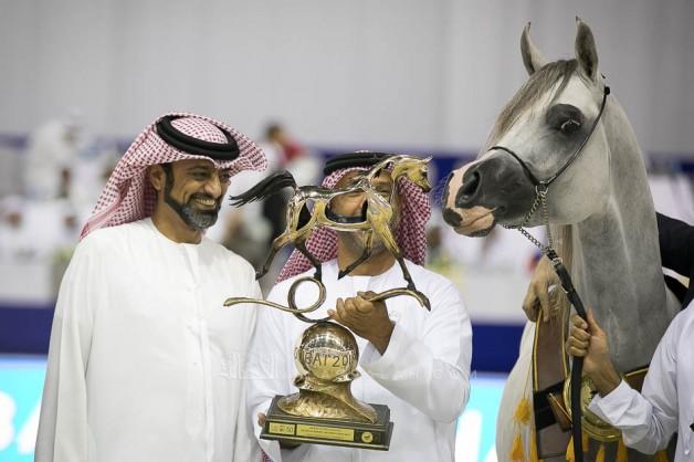 5 القاب ملونة لمربط عجمان في ختام دولية دبي 2019 للجواد العربي