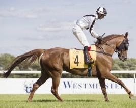 خيول مزرعة الخالدية تتألق في بولندا وتحزر ثلاثية