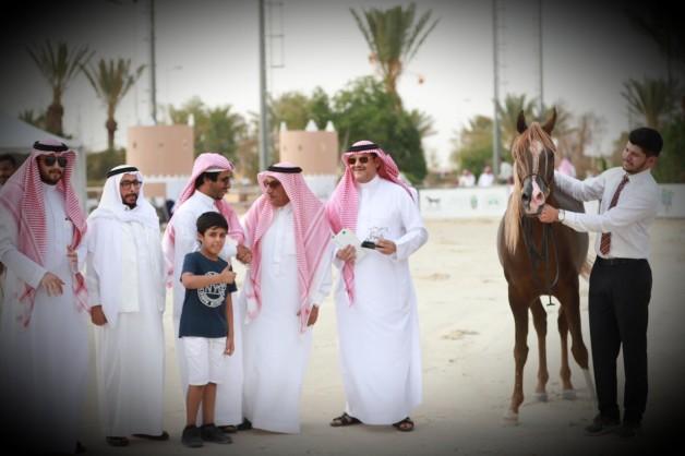 النتائج النهائية لبطولة الانتاج المحلي الثامنة 2019للخيل العربية الأصيلة