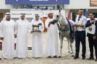 ثلاثية ذهبية لمربط دبي في مهرجان الشارقة الدولي ٢٠١٩ – السلالة المصرية