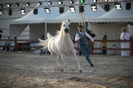 نتائج اليوم الأول لبطولة المدينة المنورة لجمال الخيول العربية 2019