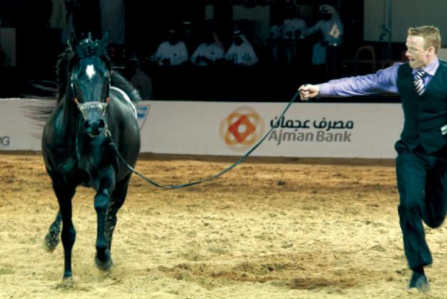 انطلاق بطولة عجمان لجمال الخيول اليوم بأعرق السلالات