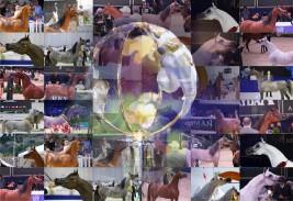أبرز المرشحين لألقاب كاس العالم باريس 2019 بالصور .. ماهي اختياراتك؟