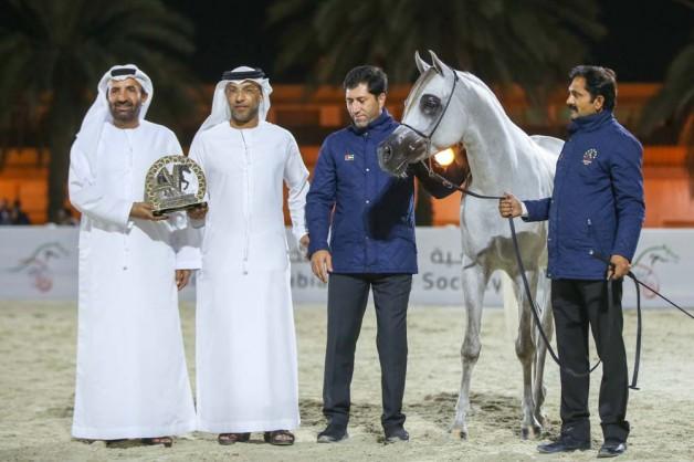 5 القاب ملونة لخيول «عجمان» في بطولة الإمارات للمربين