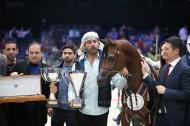 مربط دبي الأفضل في بطولة العالم 2019 لجمال الخيل العربية