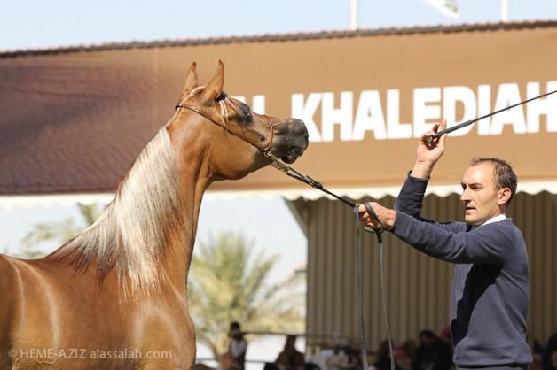 بدء التسجيل مهرجان الأمير سلطان بن عبدالعزيز العالمي للجواد العربي ٢٠١٥م