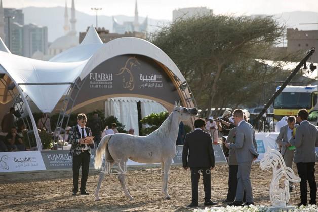 منافسات مثيرة في ثاني أيام بطولة الفجيرة 2019 لجمال الخيل العربية