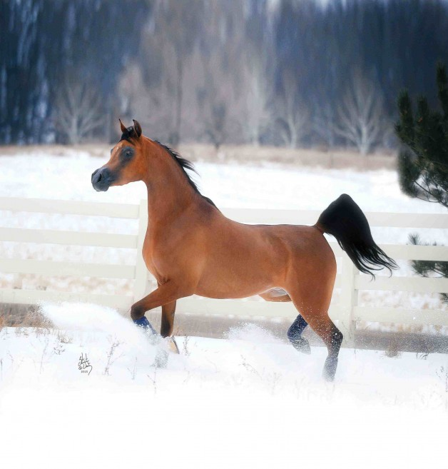 رعاية الخيول وتغذيتها في الشتاء
