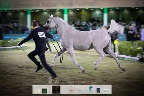 انطلاقة قوية لبطولة جمال الخيل بمهرجان الأمير سلطان بن عبدالعزيز العالمي 2020 للجواد العربي – نتائج اليوم الأول