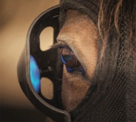 دراسة حديثة: كيف يؤثر الضوء على تربية الخيول وأدائها!