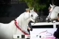 صور مقتطفة من اليوم الختامي من بطولة الشراع الدولية ٢٠٢٠ لجمال الخيل العربية