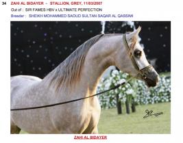 قائمة خيل مزاد الجمال والأصالة في ابوظبي بالصور