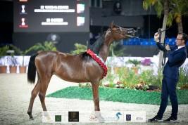 خيول «البداير» تتحلى بفضة وبرونز دولية الشراع 2020