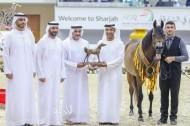 «عجمان» يحقق ذهبية و3 برونزيات في مهرجان الشارقة الدولي ٢٠٢٠ للجواد العربي