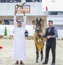 النتائج النهائية بالصور لبطولة الشارقة الدولية للجواد العربي ٢٠٢٠