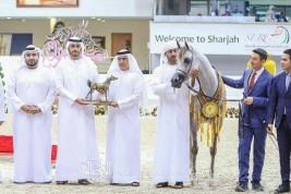 «دبي» يواصل تألقه بذهبيتان و3 فضيات في مهرجان الشارقة الدولي ٢٠٢٠ للجواد العربي