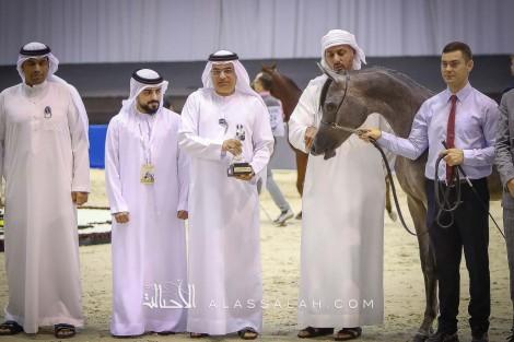تألق واكتساح لـ «دبي» و «عجمان» في افتتاح دولية دبي للجواد العربي 2020 نتائج اليوم الأول