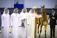 6 القاب ملونة لمربط دبي في ختام دولية دبي للجواد العربي 2020