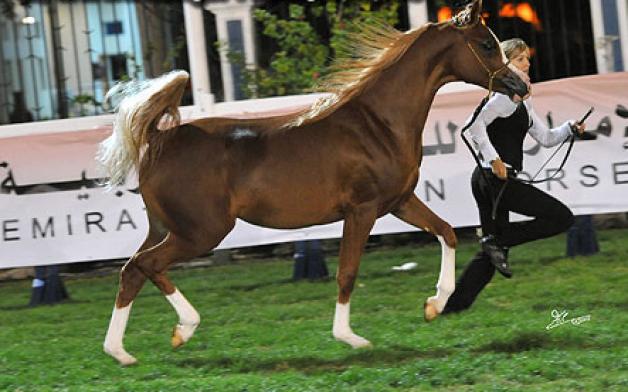 بالصور نتائج بطولة ابوظبي للجواد العربي ٢٠١٢