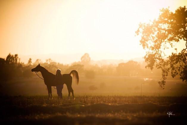 تأسيس أول جمعية لقفز الحواجز بالمملكة وتسأولات بشان غياب جمعية الخيول العربية