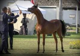برونزيتان لمربط أكمل في ختام بطولة ستروهن 2020