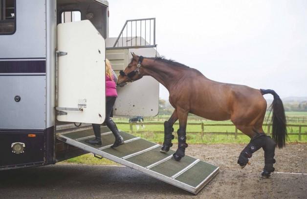 طرق علمية لجعل عملية تحميل الحصان على المقطورة آمنة وبدون مشاكل