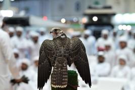تحويل معرض أبوظبي الدولي للصيد والفروسية إلى مهرجان شامل يمتد لـِ 7 أيام