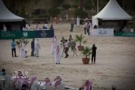 فتح باب التسجيل في بطولة الانتاج المحلي ٢٠٢٠ لجمال الخيل العربية الأصيلة – نماذج التسجيل