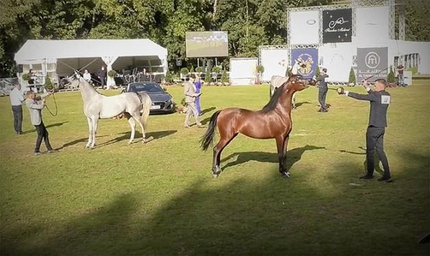 تألق للخيول الخليجية في ختام بطولة بروج 2020 – النتائج النهائية