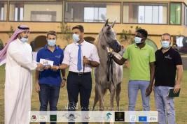 نتائج اليوم الأول لبطولة الانتاج المحلي التاسعة 2020 لجمال الخيل العربية