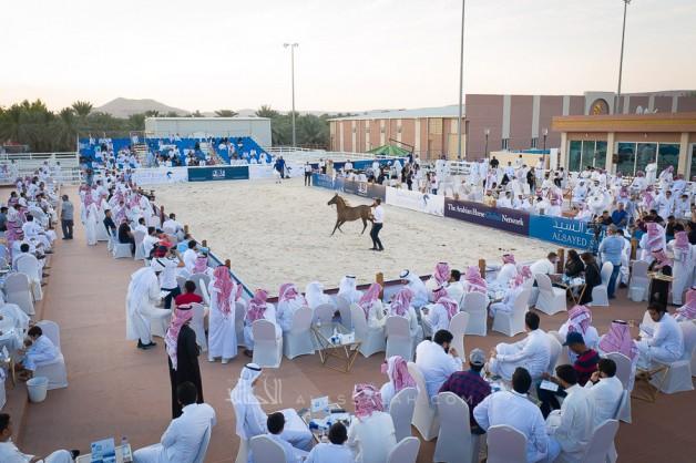 مزاد السيد 2020 الخامس للخيول العربية يقام يوم الجمعة المقبل بالجنادرية – القائمة