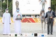 «عجمان» يحقق ذهبيتان وبرونزية في بطولة الإمارات الوطنية 2020 للخيول العربية