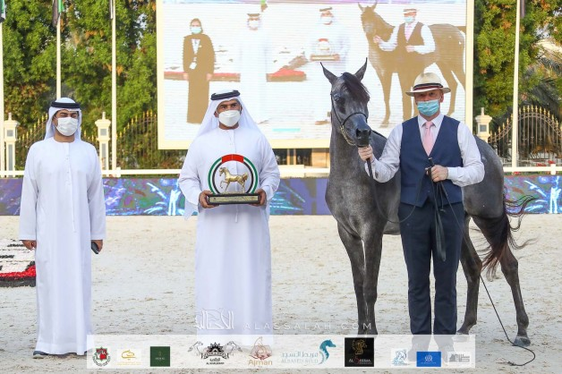ثنائية ذهبية لإسطبلات الأريام في ختام بطولة الإمارات الوطنية ٢٠٢٠ للخيول العربية