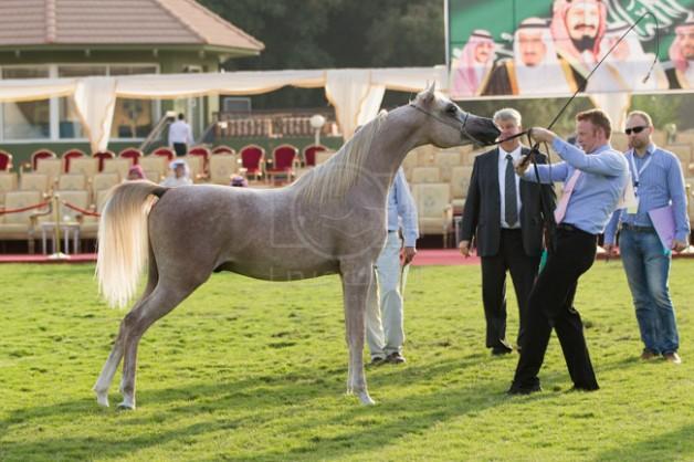 بطولة مكة المكرمة الدولية 2020 لجمال الخيول العربية تنطلق الخميس