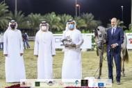 فضية وبرونزية لـ «عجمان» في ختام مهرجان الشارقة للجواد العربي ٢٠٢٠ الإنتاج المحلي