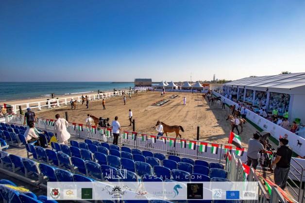 صور مقتطفة من بطولة الشارقة كلباء 2020 للجواد العربي