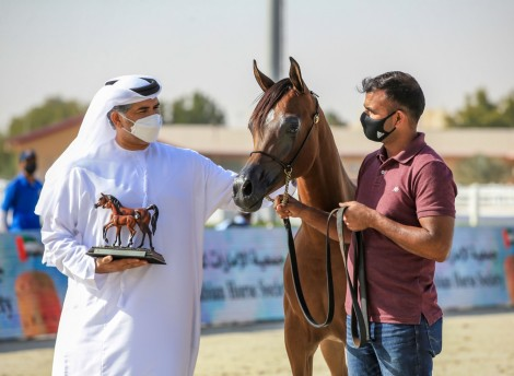 نتائج اليوم الثالث لبطولة الإمارات لمربي الخيول العربية 2021