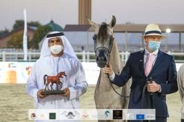 «الاريام» يحلق بذهبيتين في بطولة الإمارات لمربي الخيول العربية 2021