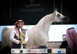 نتائج اليوم الثاني لبطولة المملكة لجمال الخيل العربية (كحيلة) 2021
