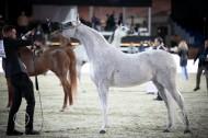 نبذة عن مزرعة خيل: إسطبلات الأريام العربية وريث خيول زايد بن سلطان آل نهيان