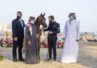 """5 القاب ملونة لمربط الشقب في ختام مهرجان """"كتارا"""" الدولي للخيل العربية 2021"""