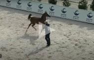 شاهد البث المباشر لبطولـة أبو ظبي الدولية لجمال الخيول العربية 2021 – اليوم الثالث