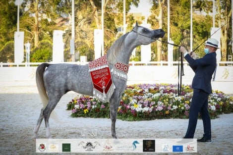 النتائج النهائية بالصور لبطولة أبوظبي الدولية لجمال الخيل العربية 2021