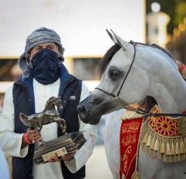 """""""سوبر هاتريك"""" ذهبي لمربط دبي في دولية أبوظبي لجمال الخيل 2021"""