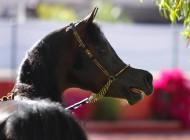 فكر كما تفكر الخيول..!