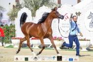 صور مقتطفة من اليوم الأول من بطولة الشارقة ٢٠٢١ الدولية للجواد العربي