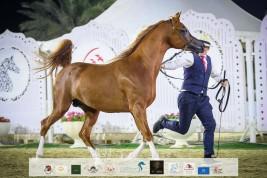 صور مقتطفة من اليوم الثاني من بطولة الشارقة ٢٠٢١ الدولية للجواد العربي
